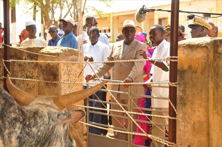 Macky Sall visite une exploitation agricole et un Centre d impulsion et de  modernisation de l élevage. Dagana 91d4d4b1e3e